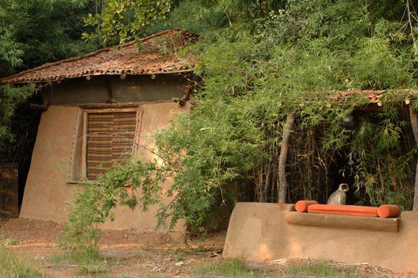 Garden -Taj Mahua Kothi Bandhavgarh