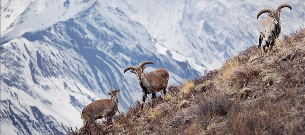 Himalayan Wildlife Holiday packages