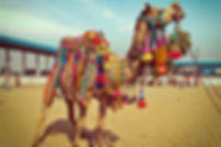 Pushkar-Camel-Fair.jpg