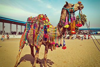 Pushkar-Camel-Fair Tours and travel packages