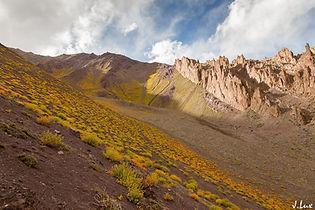 Stock La Pass Leh/ Ladakh