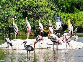 Kumarakom Backwater's Kerala