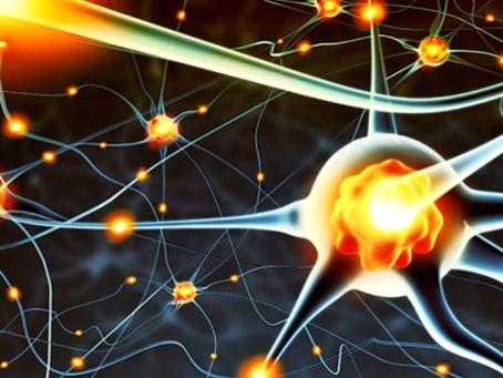 Beyin Gençleştiren Genetik Anahtar Nogo Reseptör