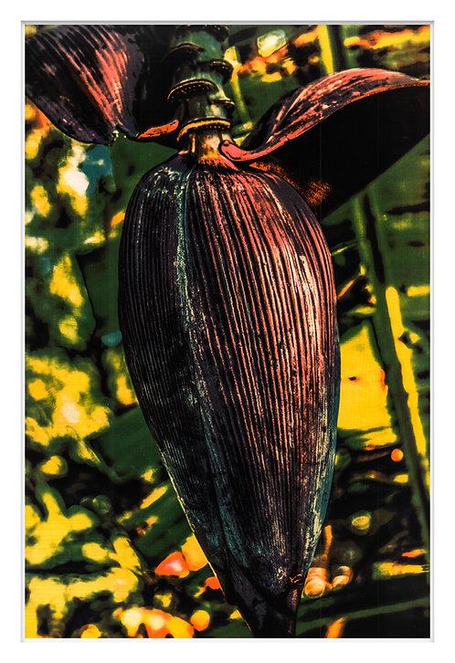 Byron Bay Rainforest Handcrafted Gum Bichromate Print #13