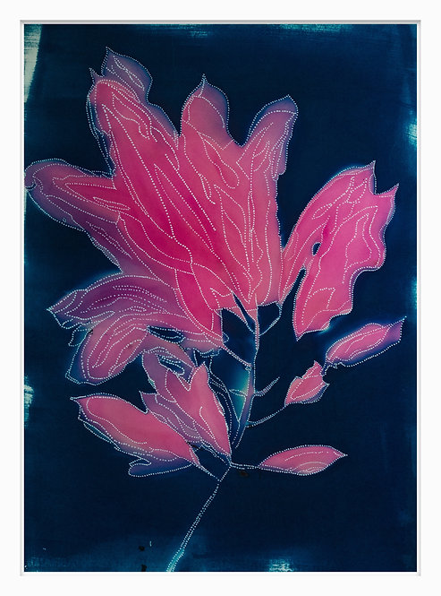 Songlines of Plants Hand Crafted Cyanotype Print #1