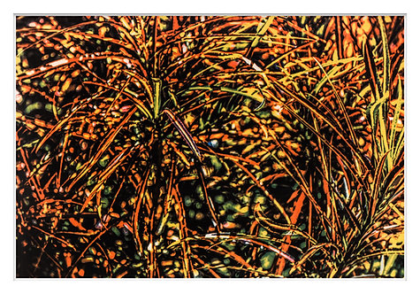 Byron Bay Rainforest Handcrafted Gum Bichromate Print #15