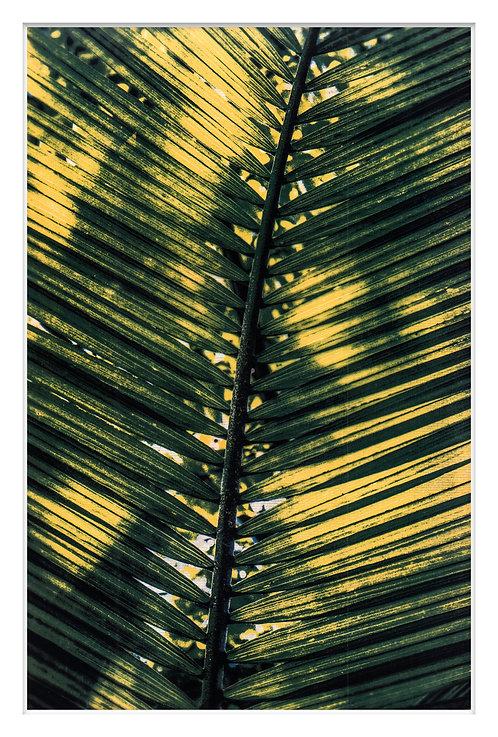 Byron Bay Rainforest Handcrafted Gum Bichromate Print #12