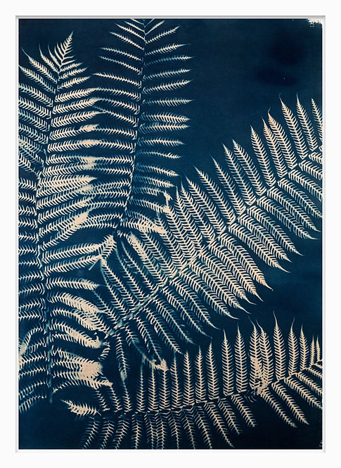 Natural Curiosities Hand Crafted Cyanotype Print #8