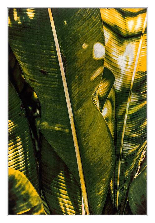 Byron Bay Rainforest Handcrafted Gum Bichromate Print #10