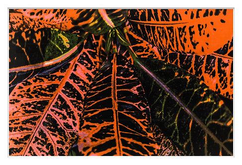 Byron Bay Rainforest Handcrafted Gum Bichromate Print #4