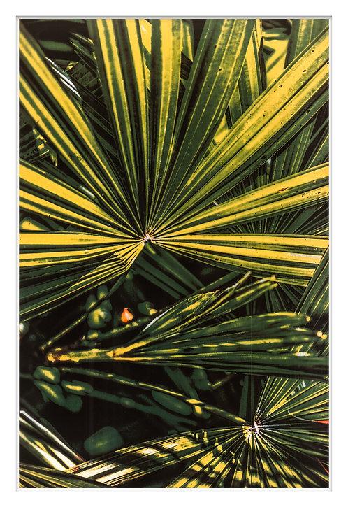 Byron Bay Rainforest Handcrafted Gum Bichromate Print #8