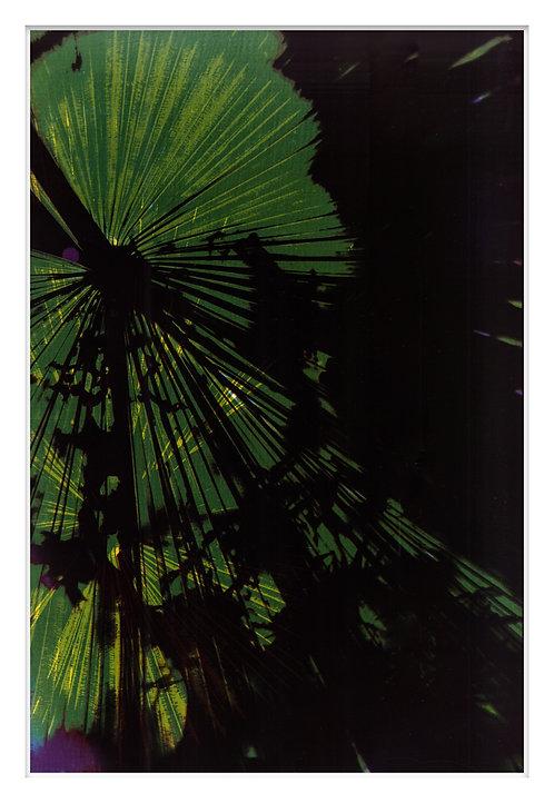 Byron Bay Rainforest Handcrafted Gum Bichromate Print #9