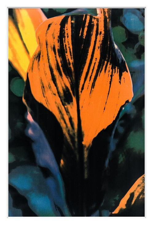 Byron Bay Rainforest Handcrafted Gum Bichromate Print #14