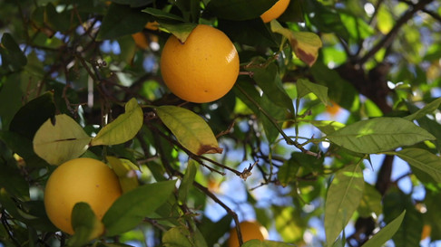 jrw-lemon narrative.mp4