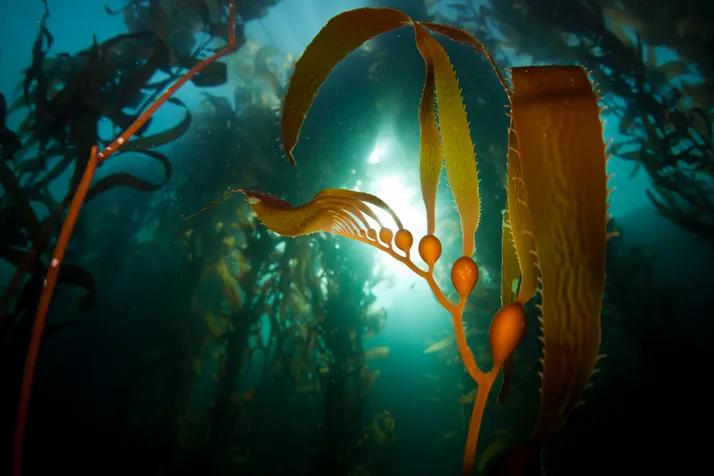 An aquaculture venture with unprecedented carbon capture goals-B-AIM PICK SELECTS