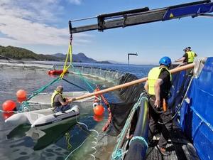 Using echo-sound to estimate biomass in aquaculture