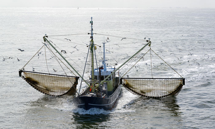 AI and machine learning to be rolled out for more sustainable fishing