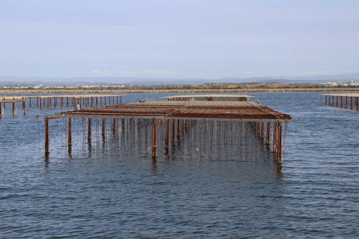 Why climate change could mean more disease for marine aquaculture-B-AIM PICK SELECTS