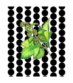 Branche de houblon 56 x 63,5-page-001