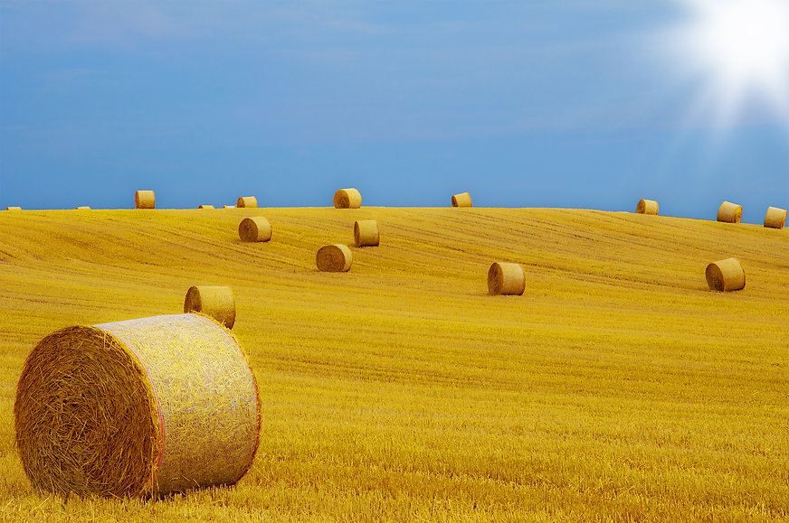 new hay.jpg