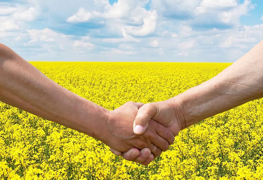 Hands Canola Landscape.jpg