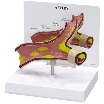 Modelo Artéria