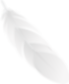 feather_PNG12989.png