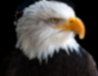 Eagle-PNG-image.png