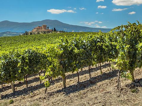 winery_Italy.jpeg