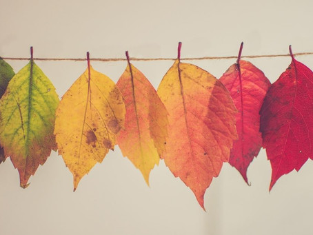 Learning To View Your Emotions Like The Seasons