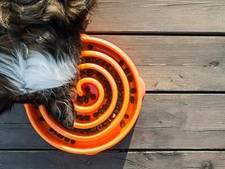 Cachorro comendo muito rápido? Como fazer ele comer mais devagar