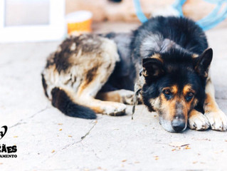 Entenda porque cães fogem de casa