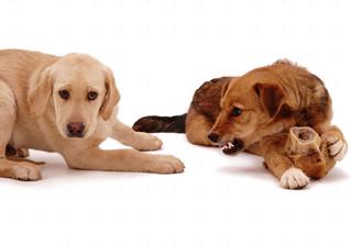 Possessividade em cães