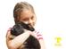 Período ideal para socialização em filhotes