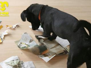 Os Motivos que Levam Seu Cão a Destruir o Tapete Higiênico ou o Jornal