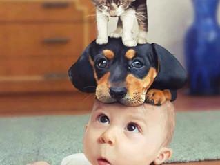 Socialize seu Cão.