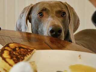 Cachorro sempre com fome