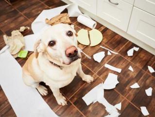 Cachorros que gostam de picar papel