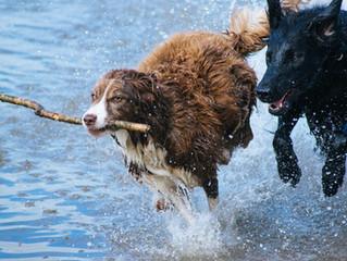 Brincadeiras para o verão com o seu dog