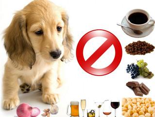 25 alimentos tóxicos para cães