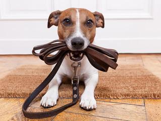4 sinais que seu cachorro precisa passear mais