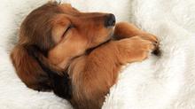 Como acostumar seu cachorro a dormir sozinho