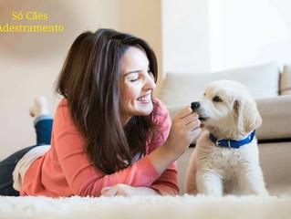 3 Dicas de Como Ensinar o Cachorro a Fazer Xixi e Cocô no Lugar Certo
