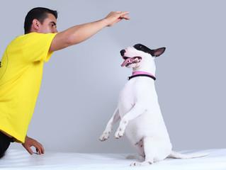 5 comportamentos que contribuem para a desobediência do seu cão