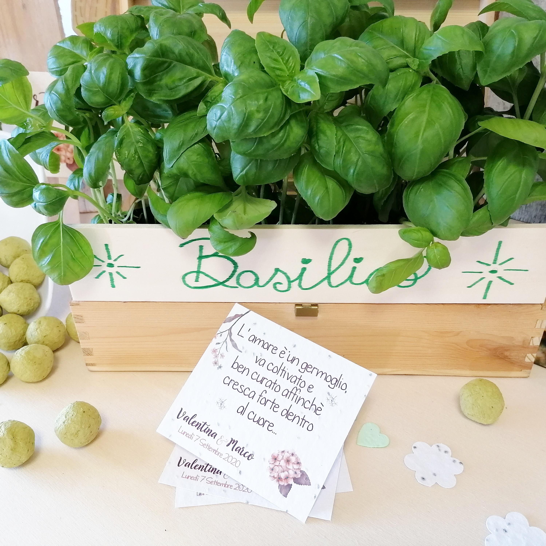 Carta Erbette Aromatiche partecipiante / partecipazioni piantabili / partecipazioni ecologiche / par