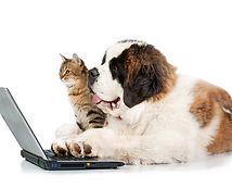 Saint bernard puppy with tabby cat in fr