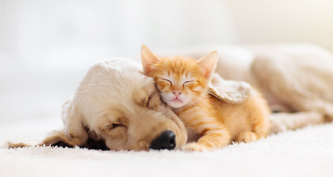 Cat and dog sleeping together. Kitten an
