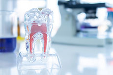A Tooth structure model for Education on