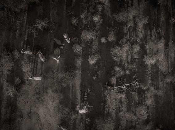 Drone Africa-12.jpg