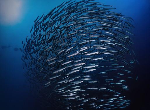 #142 ITW Shorts: Marine conservation & fish stocks with Daniel Skerritt